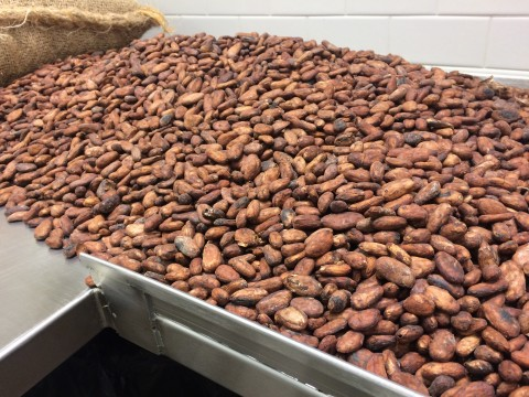 cacao beans at hexx las vegas